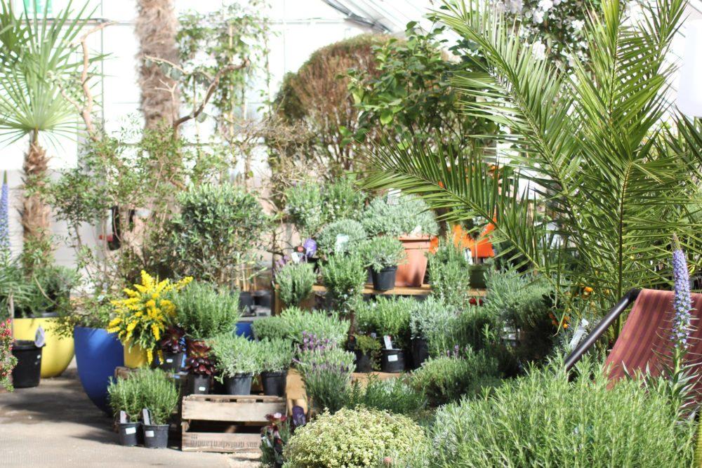 botanicka-zahrada-4