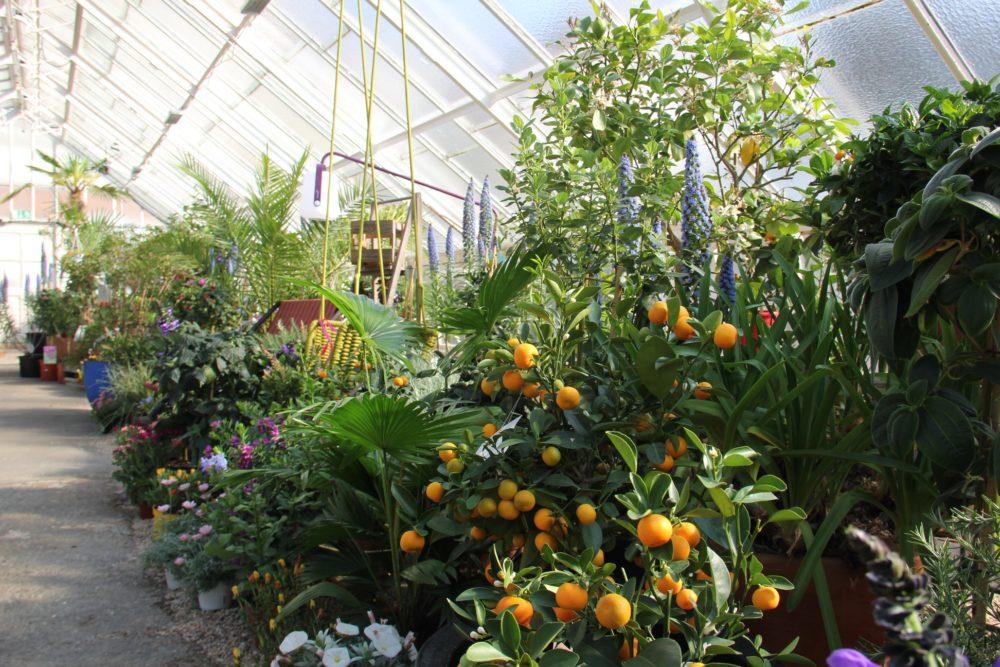 botanicka-zahrada-8