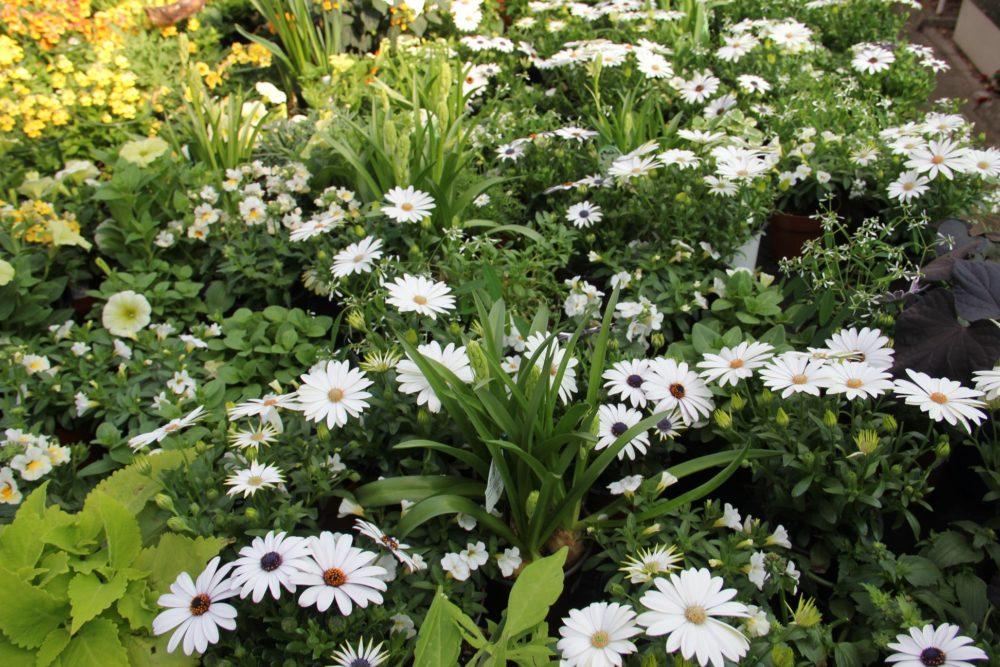 botanicka-zahrada-9