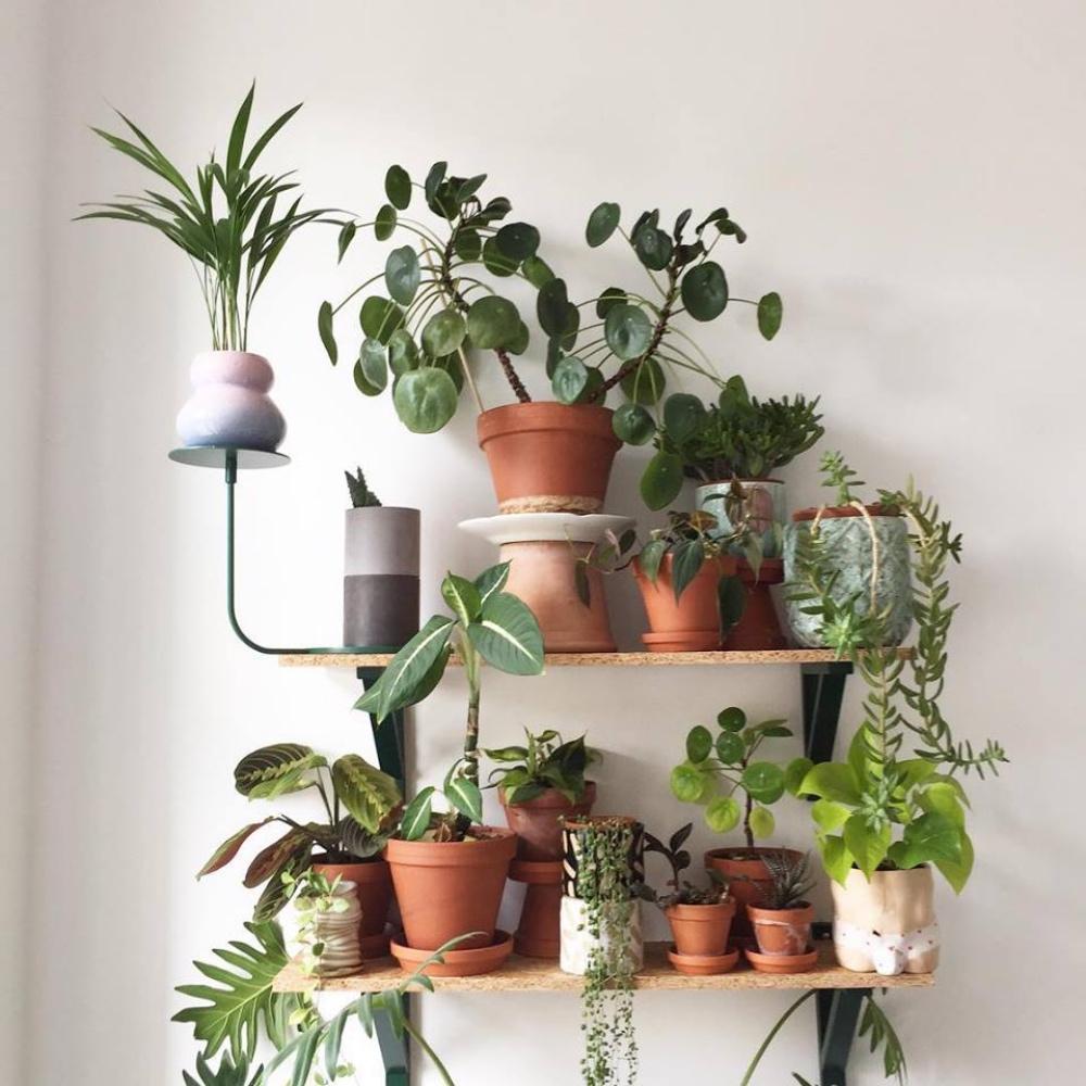 botanical-room-pokojovky-berlin-2