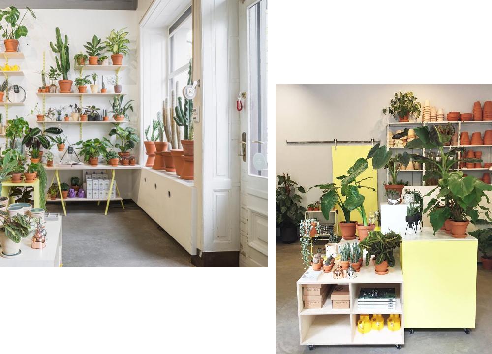 botanical-room-pokojovky-berlin