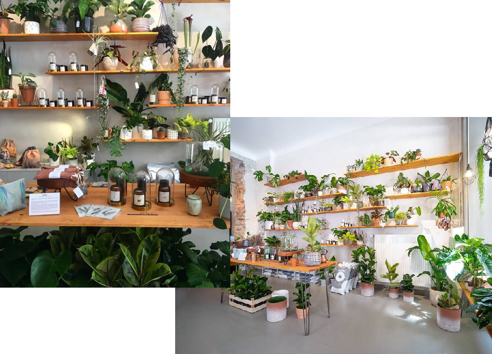plant-circle-berlin-pokojovky-1