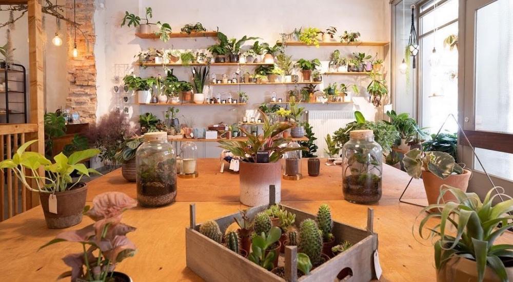 plant-circle-berlin-pokojovky-nahled