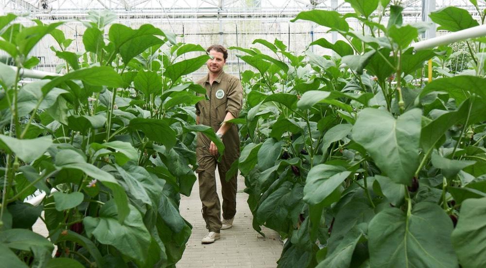 zdrave-potraviny-ECF-Aquaponik-Farmsystem