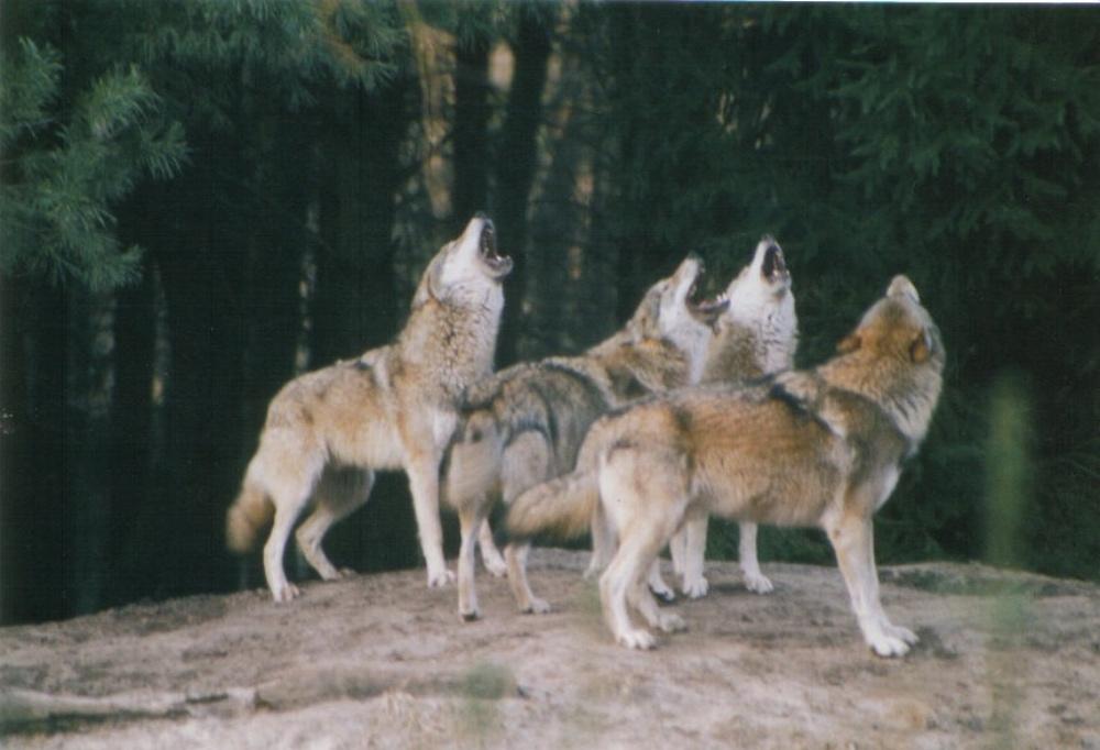 vlci-v-berline