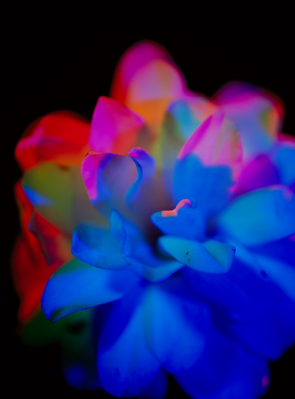 eliska-bartek-kvetina-obraz
