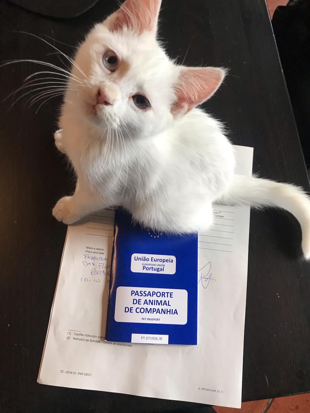 Zachráněná kočka Flores